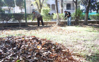 Continúa el mantenimiento a la Alameda de Jerez