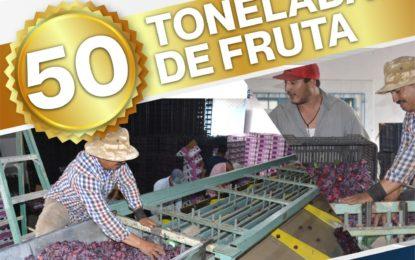 Jerez distribuye las primeras 50 de 2 mil toneladas de ciruela al mercado Nacional